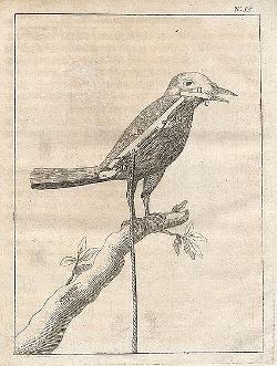 Fågelfigur